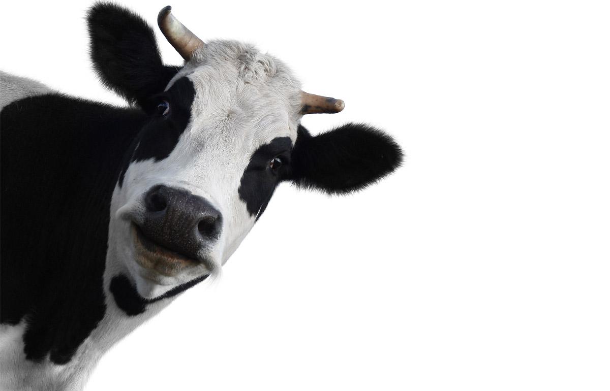 Mauri latte fresco
